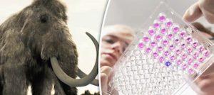 kloniranje mamuta