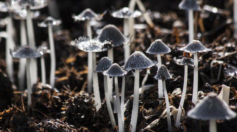 Čudesni svet gljiva – VIDEO