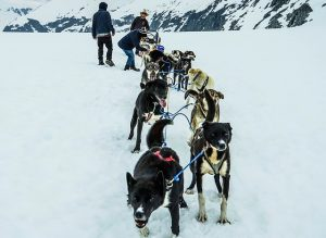 sled-dogs-363742_640